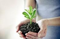 Оптовая поставка агрохимии