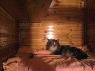 Зоогостиница для кошек «Кошкин Дом»