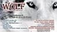 Рекламное агентство «Wolf»