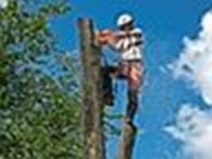 TreeAlp