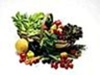 Частное предприятие Магазин товаров для сада и огорода - Погребок
