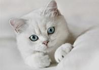 """""""Белый кот"""""""