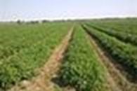 Субъект предпринимательской деятельности Фермерское хозяйство «Херсонские Овощи»