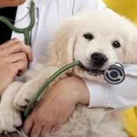 """Ветеринарная клиника """"Вертихвост"""""""