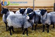 Романовские фермы