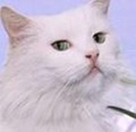 Белый Кот-Чистота без химии