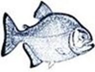 Частное предприятие Piranha Pumps