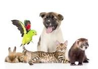 ИП Ветеринарная клиника БРАТЦЫ КРОЛИКИ