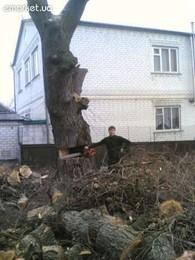 ИП Спил деревьев и веток в г. Харьков