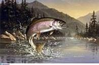 ЧП «Денисов» Товары для рыбалки и отдыха