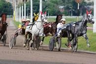 «Хреновской конный завод»