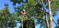 ООО Спил деревьев 32