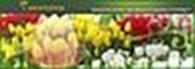 "магазин ""Tulips"""