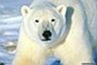 Частное предприятие ЧП «Белый Медведь-максимум»