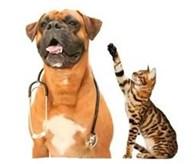 """Ветеринарная клиника """"Доктор Пин"""""""