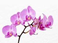 ИП Орхидея