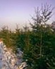 """Частное предприятие Питомник декоративных деревьев и кустарников: ПП """"Глория Дей"""""""