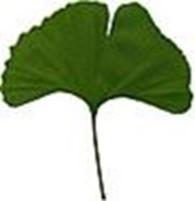Субъект предпринимательской деятельности Лекарственные растения, лекарственные травы, ягоды в сушеном виде.Medicinal herbs, berries, roots