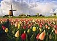 SWETA-FLORA цветы оптом из Голландии и Эквадора