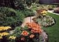 Мой сад. озеленение участка.
