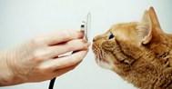 """Ветеринарная клиника """"Айболит"""""""
