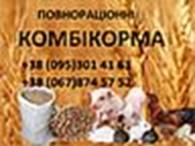 """ПП """"Комбікорм Львів"""""""