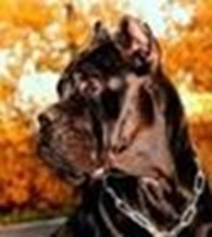 «Тигры Астаны»