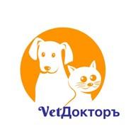 """ИП Ветеринарная клиника """"ВетДокторЪ"""""""