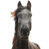 Лошадиный Экспресс