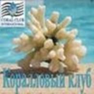 Коралловый клуб