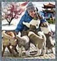 """Питомник собак """"Fire Amaterasu"""" породы Шар-пей и Американская акита, КСУ св-во № 416/12"""