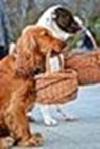 """""""Плетенка""""-Корзины и все для дома...,оптом и в розницу,из лозы,соломы, рогоза и ротанга"""