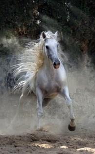 """Белая лошадь"""