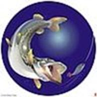 Интернет магазин «MenFish.by»