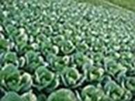 фермерское хозяйство Надія