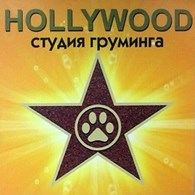 """ИП Груминг салон """"Hollywood"""""""