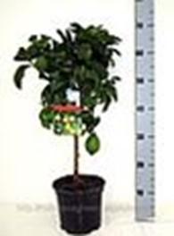 """Магазин """"Green"""" - широкий выбор многолетних и однолетних растений, а так же посадочный материал."""
