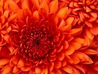 1001 Цветок