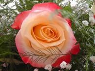 Торговый Дом - Роза