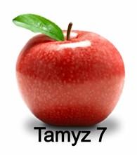 Компания Tamyz 7