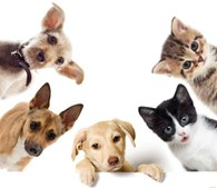Ветеринарная аптека «ЗООВЕТСНАБ»
