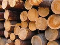 Деревообрабатывающая компания