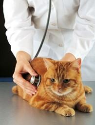 Ветеринарный врач - вызов на дом
