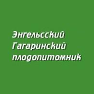 Энгельсский Гагаринский плодопитомник