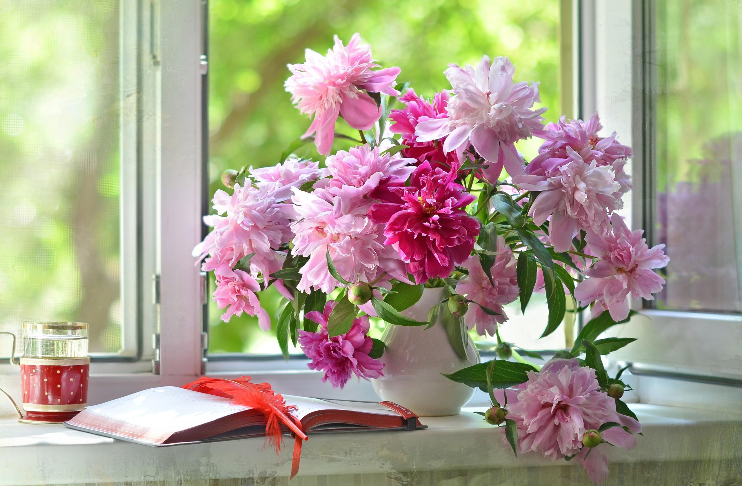 только красивые картинки окно с цветами самых
